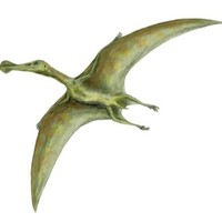 Coldham's Common: Flying Pterosaurs