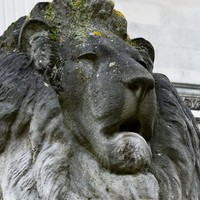 Victorian Lions of  the Fitzwilliam Museum