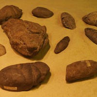 Victorian Coprolite Mining & Pterosaurs