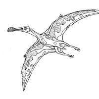 Pterosaur Colouring In Sheet